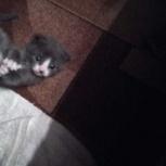 Отдам даром котят, Новосибирск
