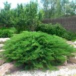 Ландшафтный дизайн, услуги садовника, Новосибирск