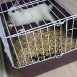 Продается декоративный кролик с клеткой, Новосибирск