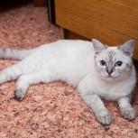 Красавица - кошечка Синди ищет семью, Новосибирск