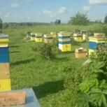 Продам Алтайский мед со своей пасеки, Новосибирск