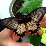 Продажа тропических бабочек, Новосибирск