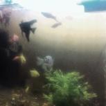 Продам аквариум с рыбками, Новосибирск