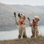 Дрессировка собак. Кинолог, Новосибирск