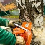 Спил аварийных деревьев, Новосибирск