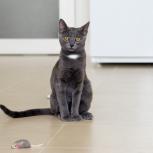 Котёнок девочка, 5 мес, Новосибирск
