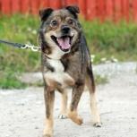 Ищет дом пес Мурзик!, Новосибирск