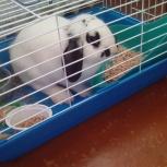 Продам декоративного кролика с клеткой, Новосибирск