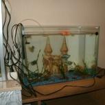 Продам аквариум, Новосибирск