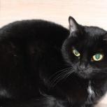 Кошка Багира 2 года, Новосибирск