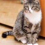 Ищем дом Алисе - кошке с особенным характером., Новосибирск