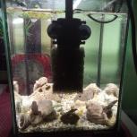 Аквариумные лягушки, Новосибирск