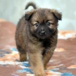 Щенок-мальчик ищет семью, Новосибирск
