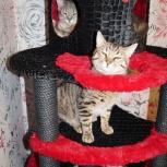Продам. Игровые комплексы, домики, когтеточки, лазилки для кошек, Новосибирск