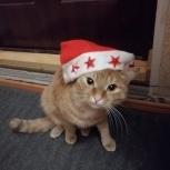 Кот-Охотник, 2.5 года, в добрые руки, Новосибирск