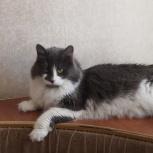 Кошка Лиза, Новосибирск