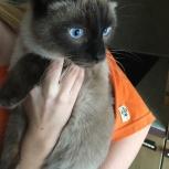 Потерялся кот в Октябрьском районе, Новосибирск