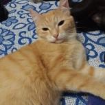 золотое ласковое солнышко кошечка. Руслана, Новосибирск