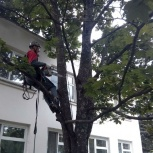 Спил, кронирование, обрезание деревьев, Новосибирск