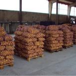 Картофель оптом 5+ от производителя 9.50 р 1/кг, Новосибирск