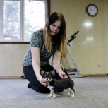 Курс послушания, ринговая дрессировка для щенков и взрослых собак., Новосибирск