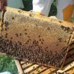 Продается оптом липовый мёд из Приморского края от производителя, Новосибирск