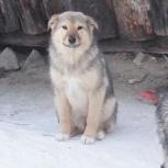6 щенков от беспородной собаки-мамы, Новосибирск