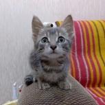 Отдам котёнка, мальчик, Новосибирск