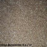 фуражная пшеница, фуражный овес, Новосибирск