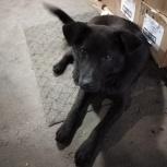 Отдам в хорошие руки добрую и ласковую собаку, Новосибирск