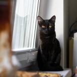 Котёнок девочка, 5 мес., Новосибирск