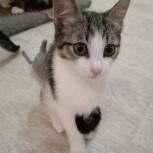 Котёнок, Новосибирск