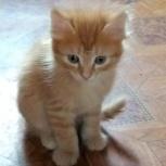 Отдам рыжего котенка в добрые руки, Новосибирск