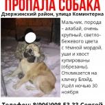 Пропала собака дзержинский район, ул коминтерна, Новосибирск
