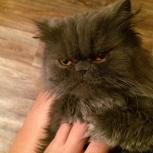 Помогите найти кошку!, Новосибирск
