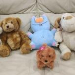 Медвежата, собачки,котики, Новосибирск