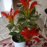 Продам растение, Новосибирск