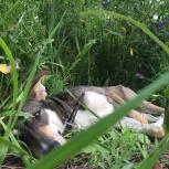 Даром собака, Новосибирск