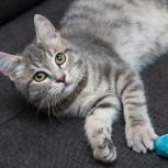 Серенький котёнок Джекки, Новосибирск