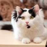 Встречайте-кот Мурзик!, Новосибирск