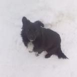 пристраивается мальчик пес, Новосибирск