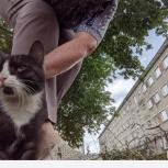 Ищем хозяев для кошечки, Новосибирск