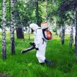 Уничтожение клещей. Обработка от клеща., Новосибирск