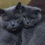 Отдам кота и кошку, Новосибирск