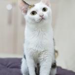 Кошка-Крошка ищет дом, Новосибирск