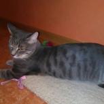 Найден котик, в академ городке. Отдам, Новосибирск