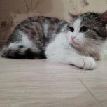 Котенок из сугроба ищет дом, Новосибирск