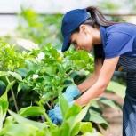 Выполним садово-огородные работы, Новосибирск