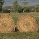 продам сено в рулонах с доставкой, Новосибирск