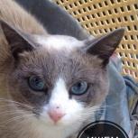 Замечательный, душевный кот, Новосибирск